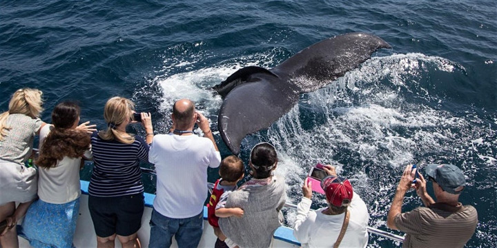 Newport Beach ~ End of Feb 2020 ~ Whale Watching Special ~ From $15